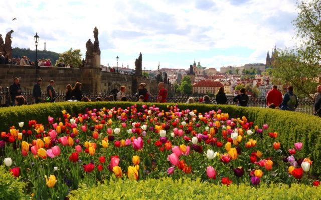 Tulpenfeld Prag
